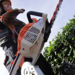 With My Stihl Hedge-Cutters