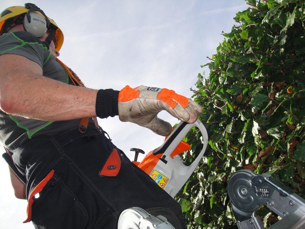 Cutting Beech Hedge