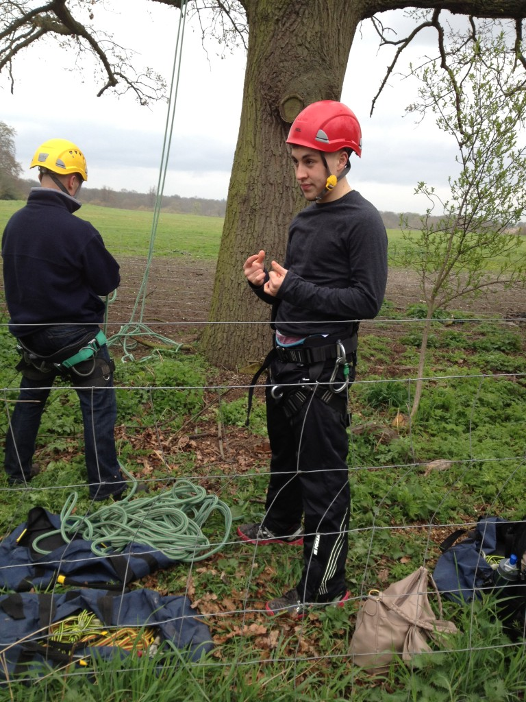 Climbing On A Large Oak
