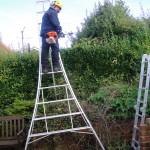 Trimming Privet Hedge