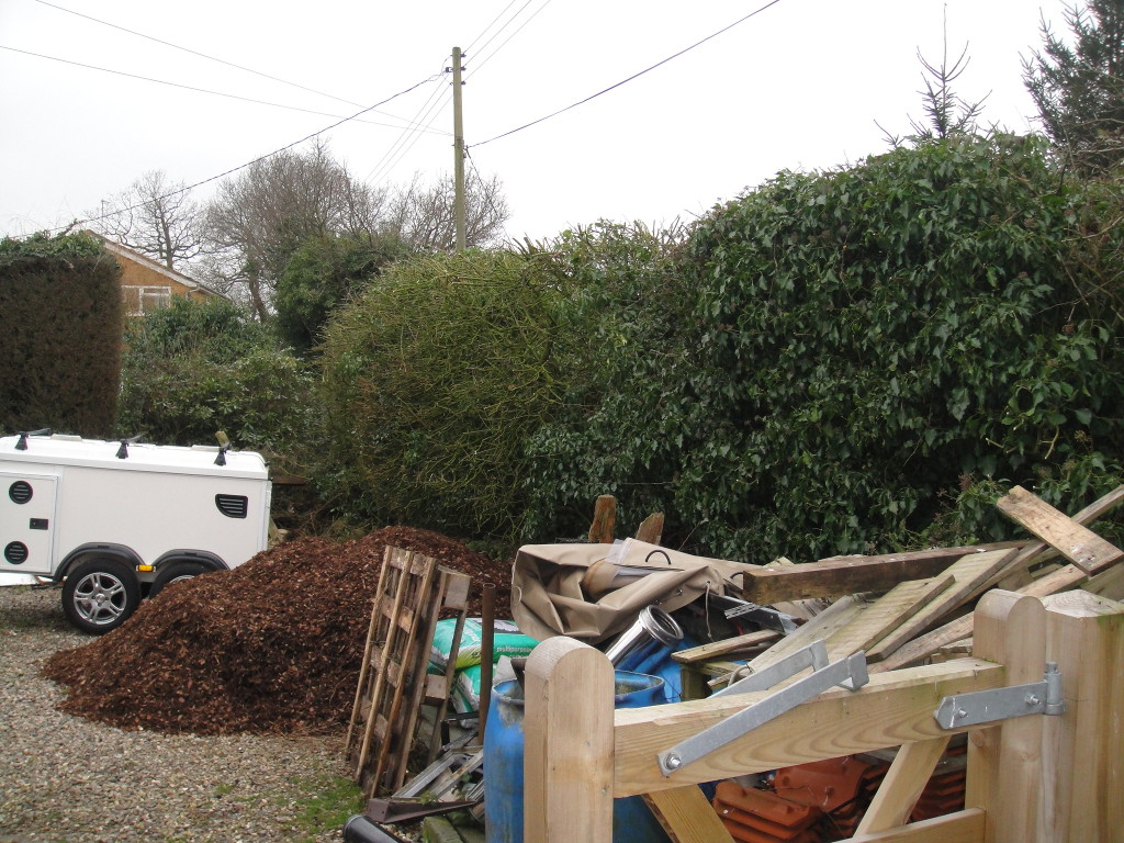 AFTER - Large Hedge With Mixed Trees - March '13