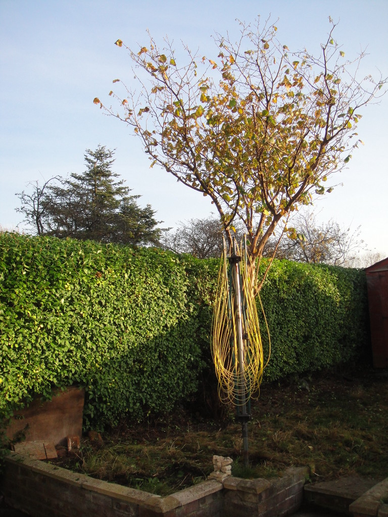 AFTER Privet Hedge & Cob-Nut Tree - Oct 2012