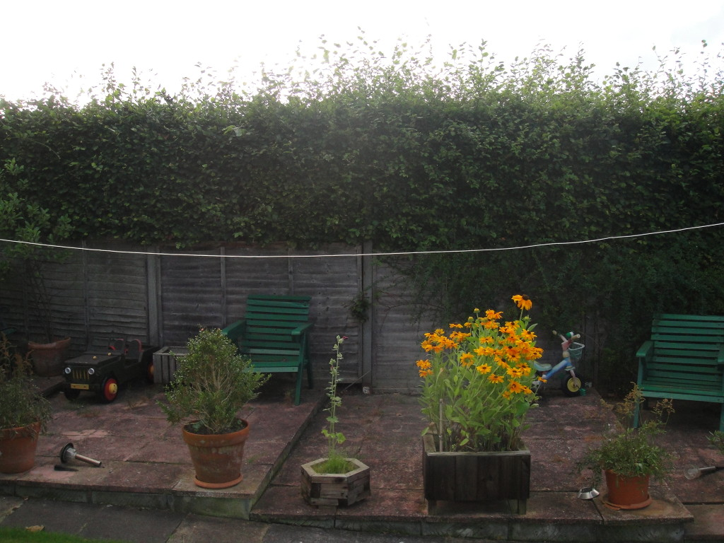 BEFORE - Beech Hedge - Aug 2012