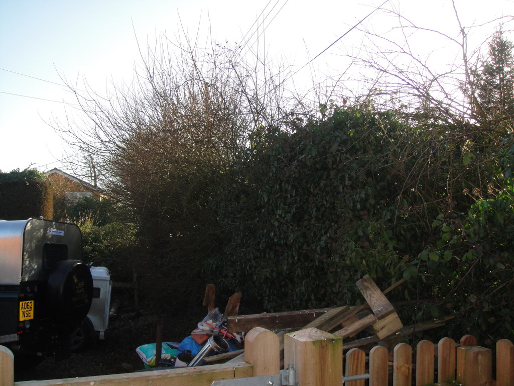 BEFORE - Large Hedge With Mixed Trees - March '13