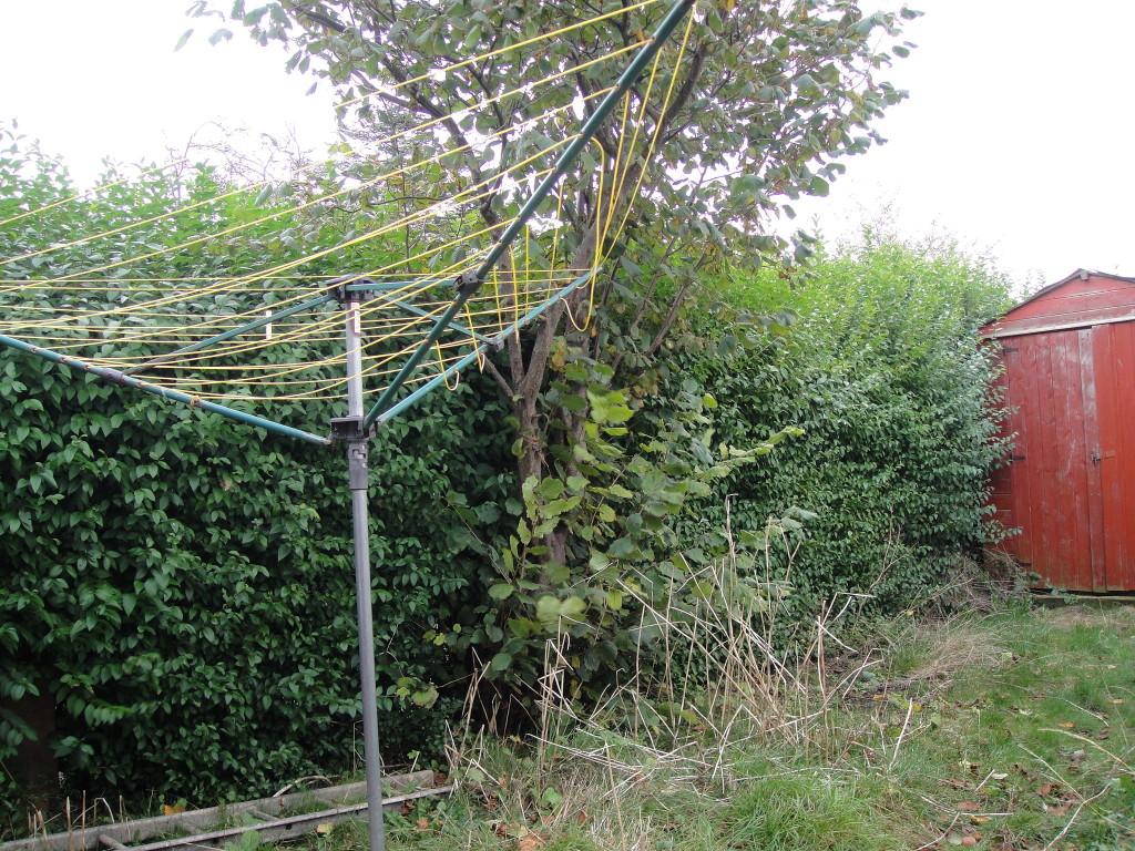 BEFORE - Privet Hedge & Cob-Nut Tree - Oct 2012