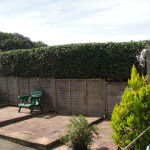 2.AFTER - Beech Hedge - Aug 2012