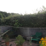 2.BEFORE - Beech Hedge - Aug 2012