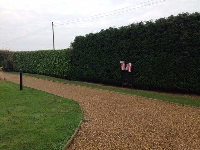 4.AFTER - Leylandii & Laurel Hedge Both Looking Good After Reduction & Trim - Dec '16