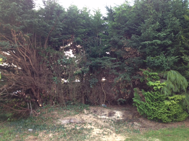 4.AFTER - Leylandii Taken  Down To Ground Level - Nov '16