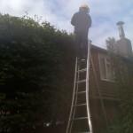 Large Beech Hedge