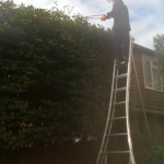 Cutting Large Beech Hedge