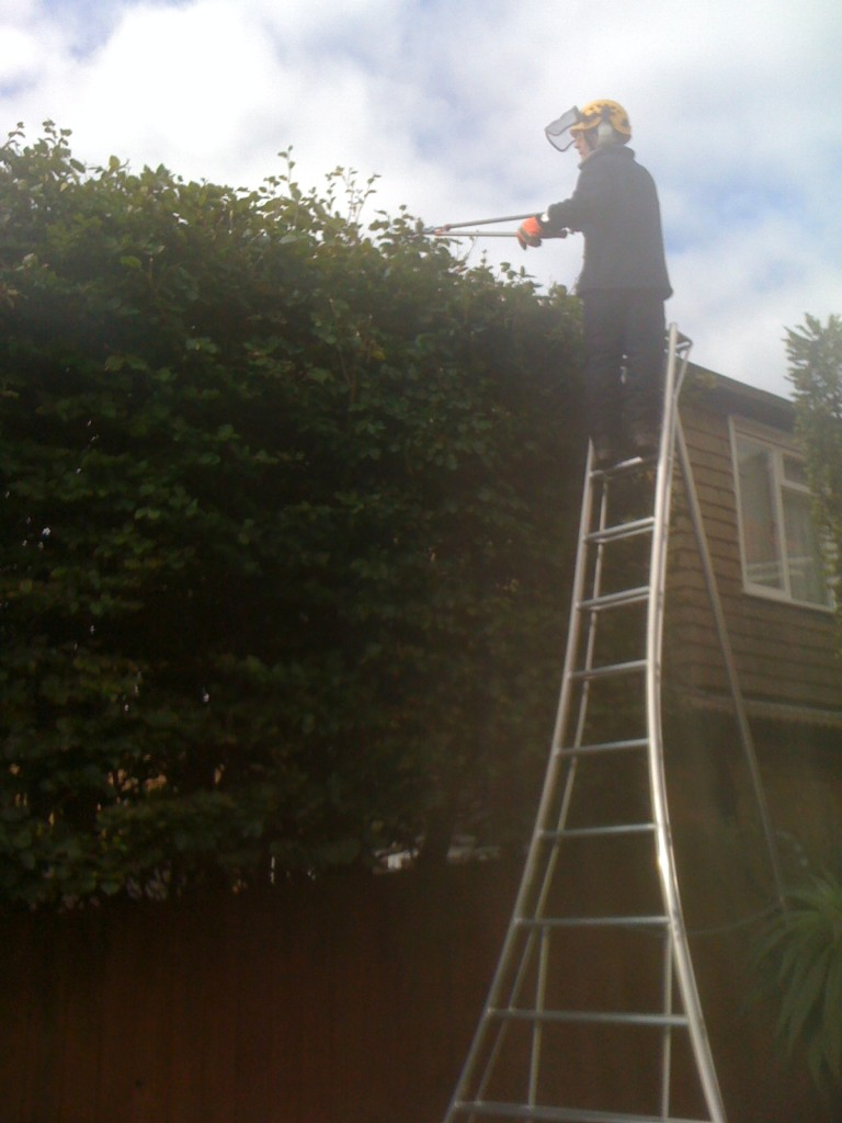 Cutting Large Beech Hedge
