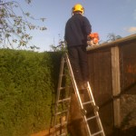 Getting The Hedge Top Even