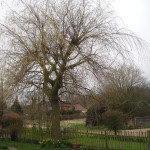 BEFORE: Willow Tree view from cottage - April '13