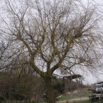 BEFORE - Willow Tree View from lawn - April '13