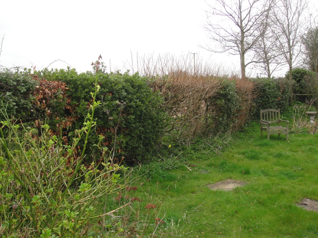 BEFORE - small mixed variety hedge - April '13