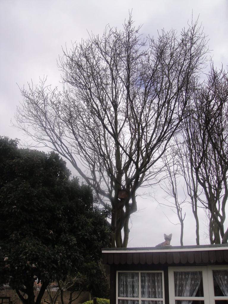 BEFORE - Medium Garden Tree - May '13