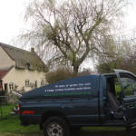Truck & Willow Tree