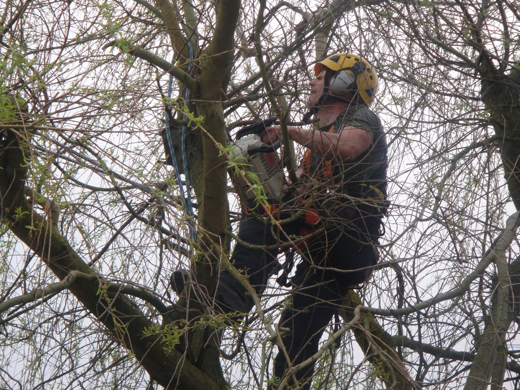 Chainsaw in a Willow Tree