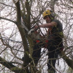 Using my MS200T on a Willow Tree