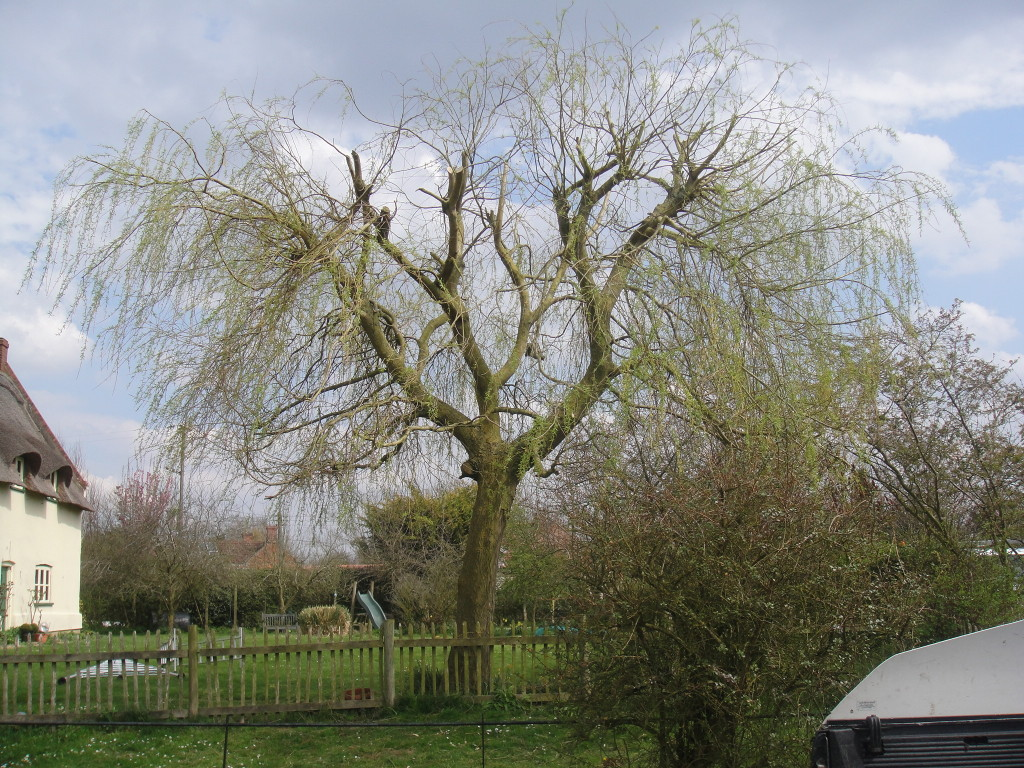 AFTER - Willow Tree view towards cottage reduced by 20% April '13