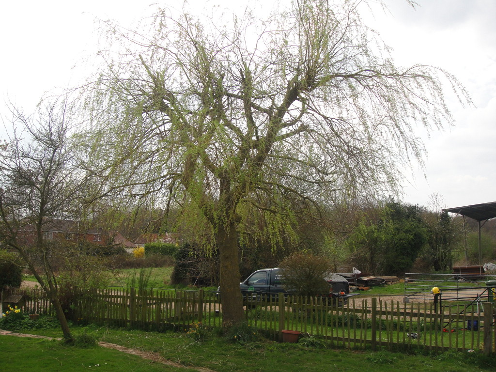 AFTER - Willow Tree view from cottage reduced by 20% - April '13
