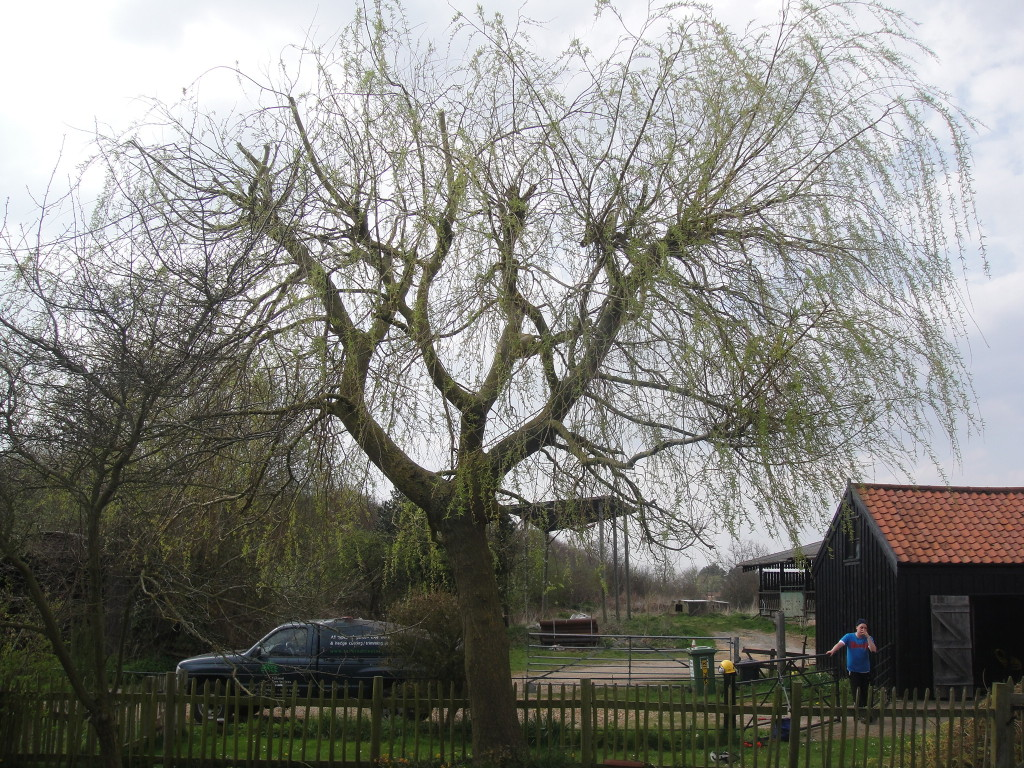 AFTER - Willow Tree view from lawn reduced by 20% - April '13