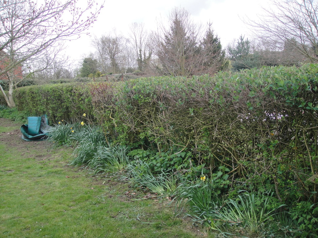 AFTER - Mixed variety hedge - April '13