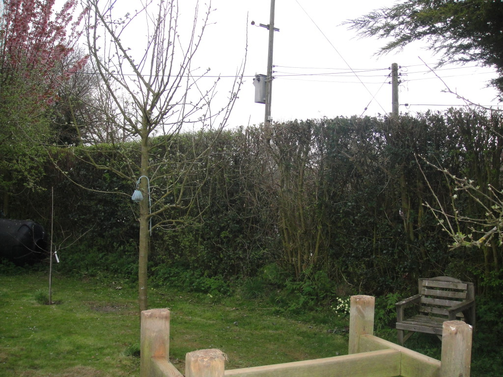 AFTER - Large mixed variety hedge - April '13