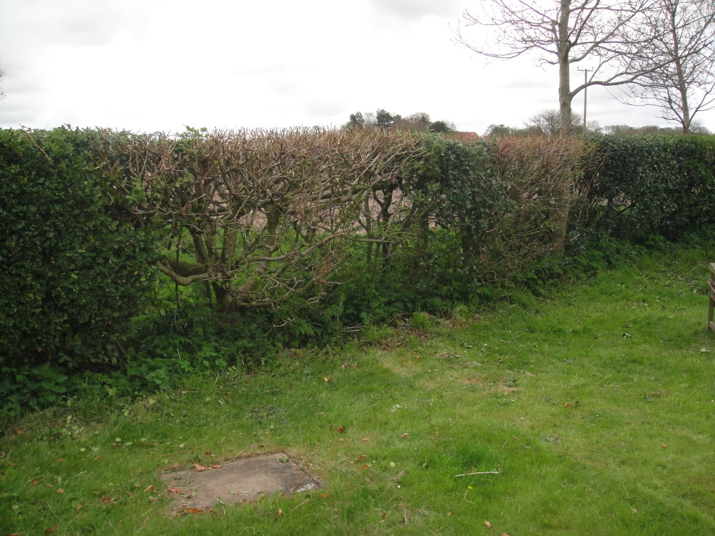 AFTER - Small mixed variety hedge - April '13