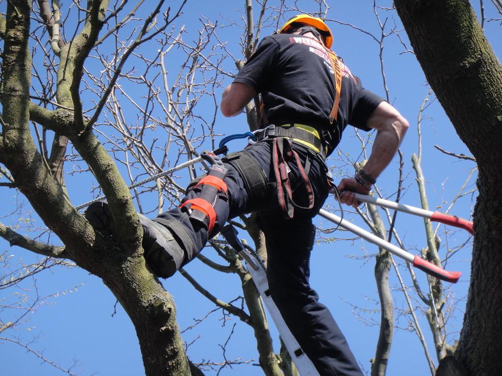 Half ladder half tree !