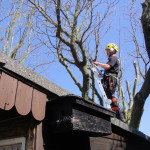 Reduction on a Mulberry tree