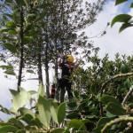 Up the Holly Tree