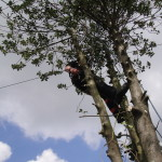 Dismantling the Holly Tree