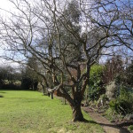 AFTER - Apple Tree After A Good 30% Crown Reduction & Lift - Feb 14