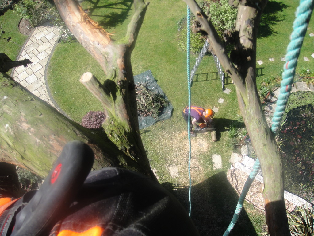 Looking down on Jamie from large Cypress Tree