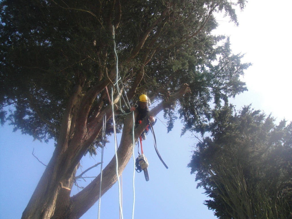 Getting ready to dismantle branches