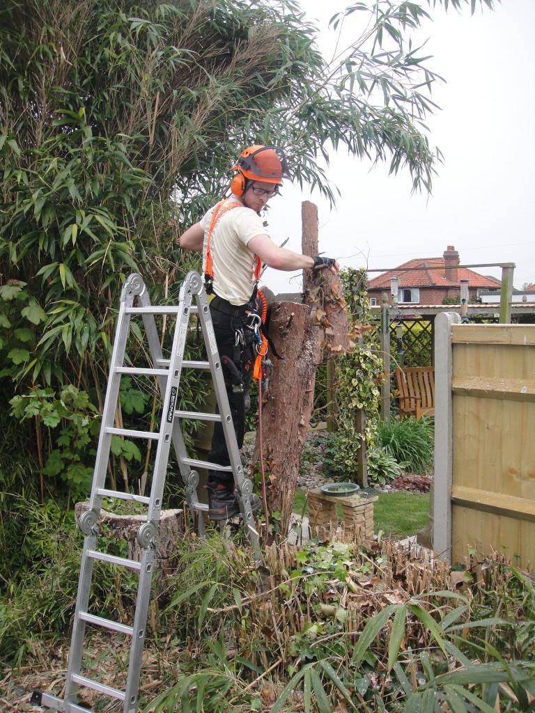 Jamie making final cuts on Leylandii trunk