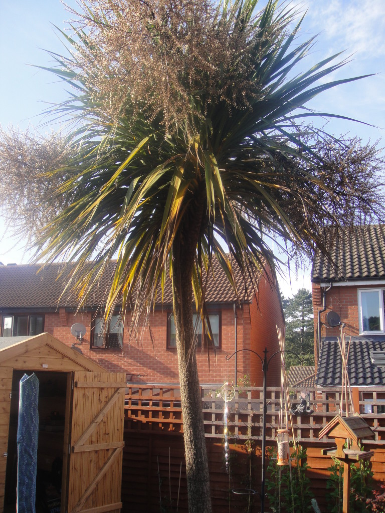 BEFORE - Small Garden Palm Tree To Be Dismantled - June '14