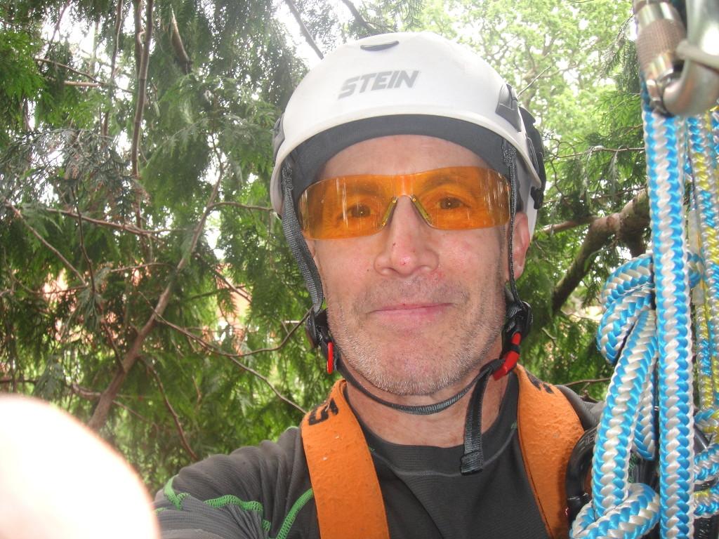 """""""Selfie"""" in large Leylandii"""
