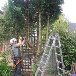 Removing Lower Branches