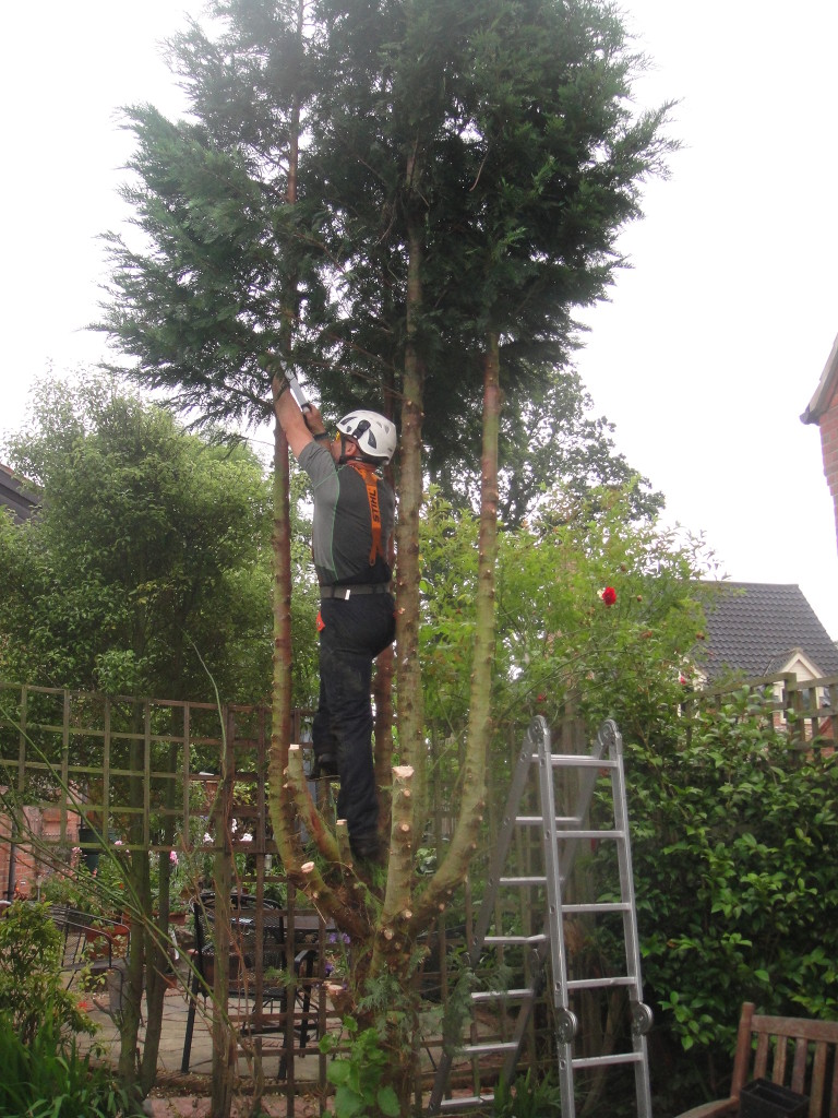 2. Lower Branches Being Removed.