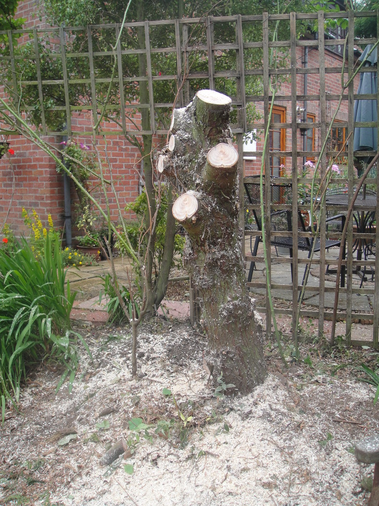 3.Main Stump Left To Cut Down To The Ground.