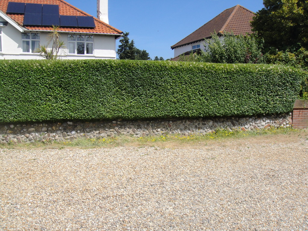 AFTER - Privet Hedge Looking Neat And Tidy - July '14