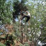 Jamie Removing High Stems On A Leylandii
