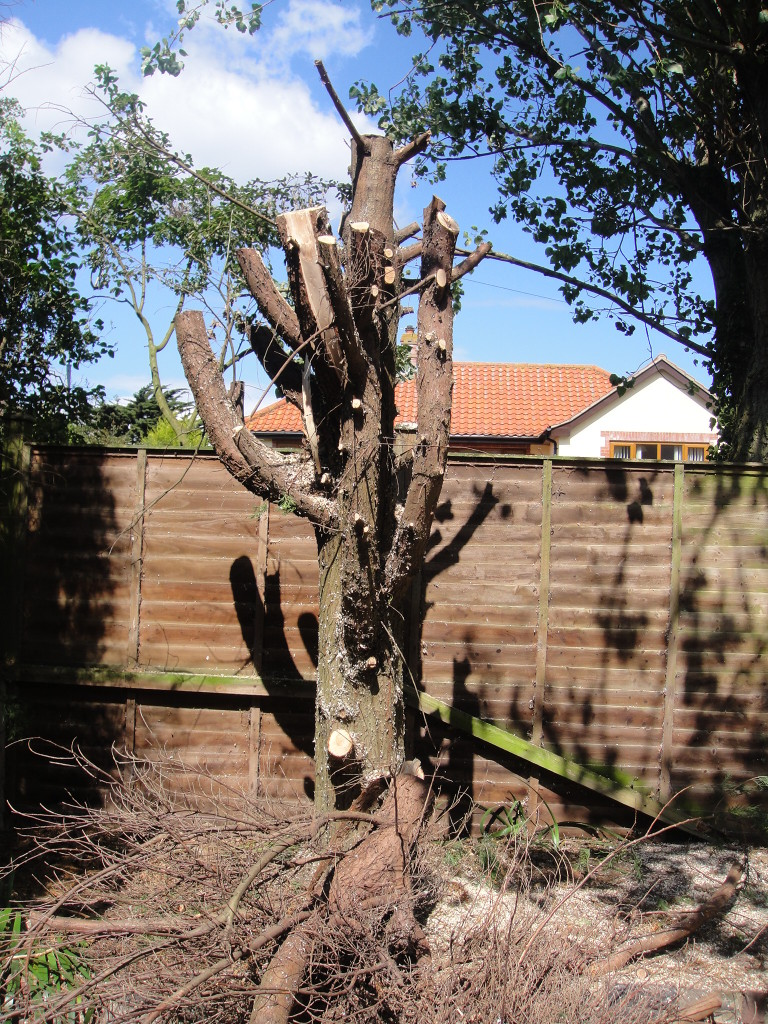 3.All Main Stems & Branches Removed