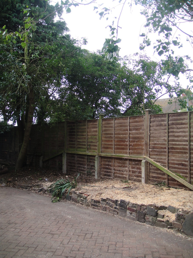 4.AFTER - Medium Leylandii Tree Dismantled To Ground Level - Aug '14