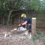 Final Cut On A Leylandii Stump
