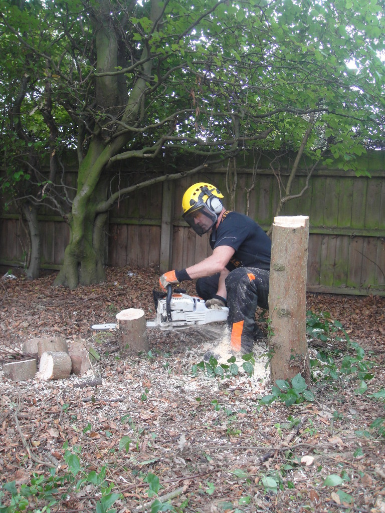 Final Cut On A Leylandii Stump