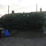 AFTER - The Mix Of Hawthorne Trees, Brambles, Ivy & Oak Tree Cut To A Hedge - Sept '14